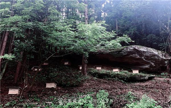营子村蜜蜂养殖 熊宛露摄_副本.jpg