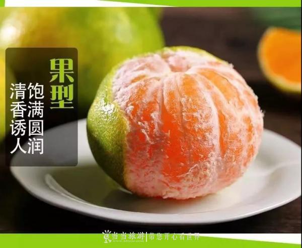 武当蜜橘.jpg