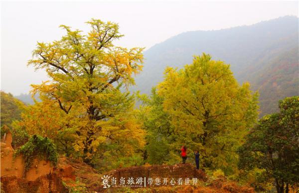 游客在欣赏银杏谷的美景 李明星摄.jpg