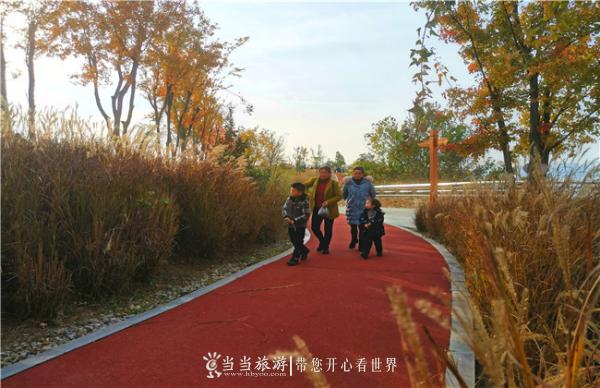 漫步在芦苇拥簇的步行道.jpg