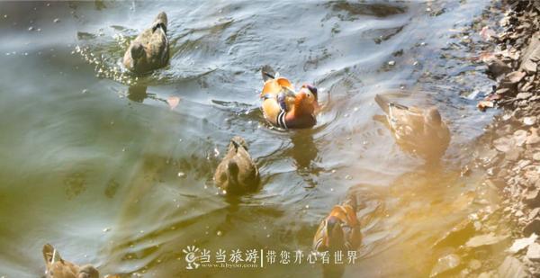 鸳鸯2_看图王.png