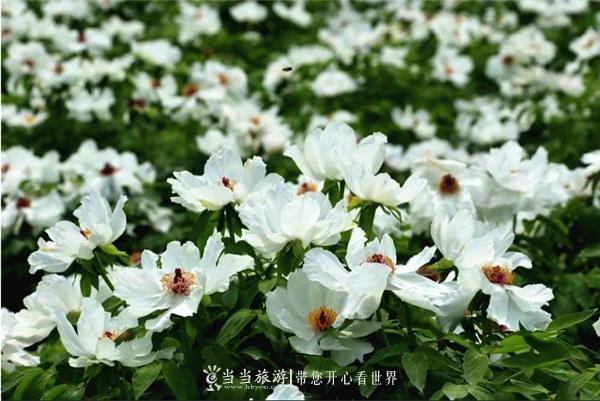 QQ图片20200402145405_副本.png