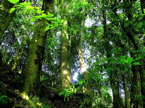 金丝楠木属楠木家族中的上品