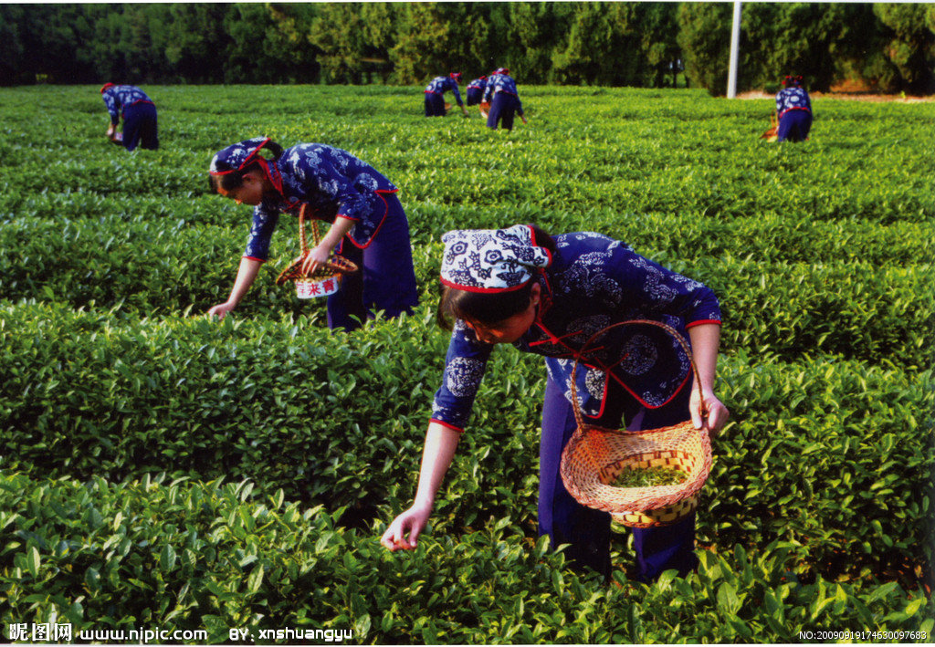 """【资讯】全国最大""""茶博园""""开园  成茶文化旅游景点"""