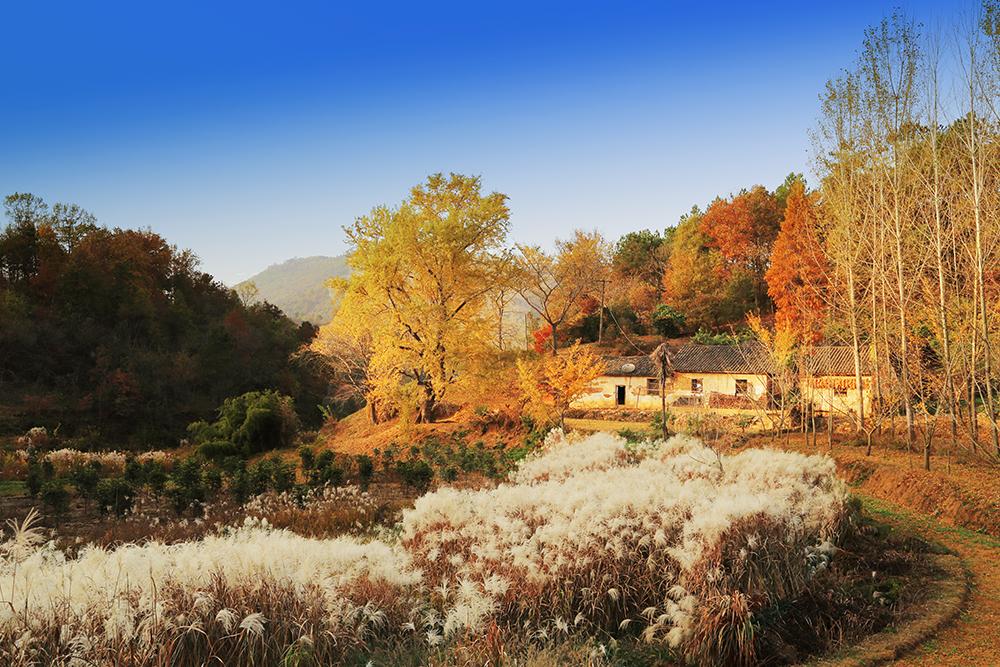 随州千年银杏谷+大洪山风景区两日游