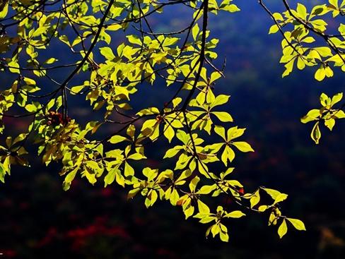 《秋日光影》