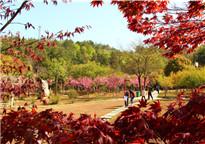 红枫映红四方山