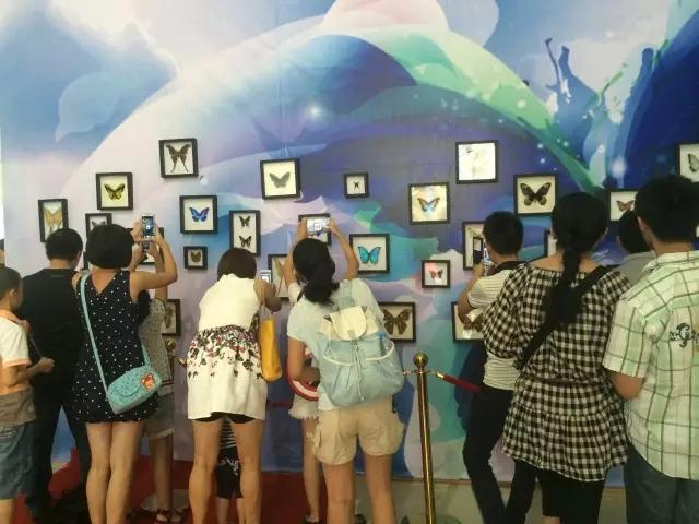 【资讯】免费参观,本周日丹江口将展出世界最美蝴蝶