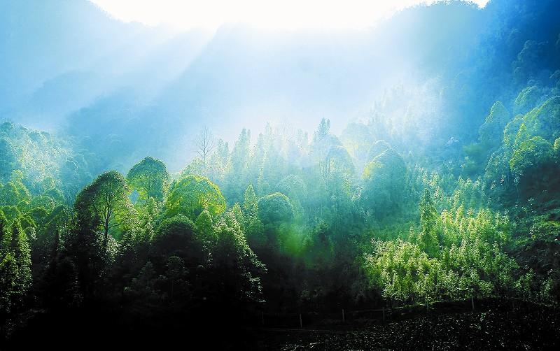 湖北诗经源国家森林公园