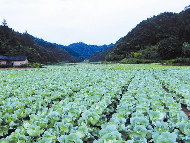 茅箭大川生态农业观光园