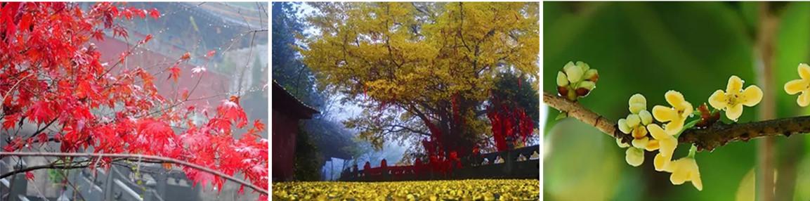 即使欣赏过再美的风景 十堰人请不要错过这里的秋景