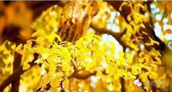 【资讯】大量美图送上  随州的秋天美呆了