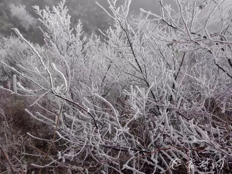 郧西湖北口现罕见雾凇景观