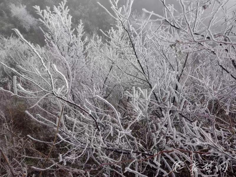 【资讯】美翻了!郧西湖北口现罕见雾凇景观