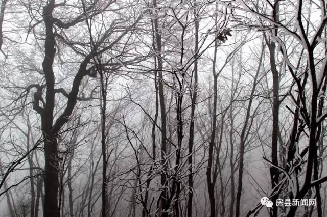 """【资讯】房县万峪惊现""""水墨诗画""""般的雾凇美景"""