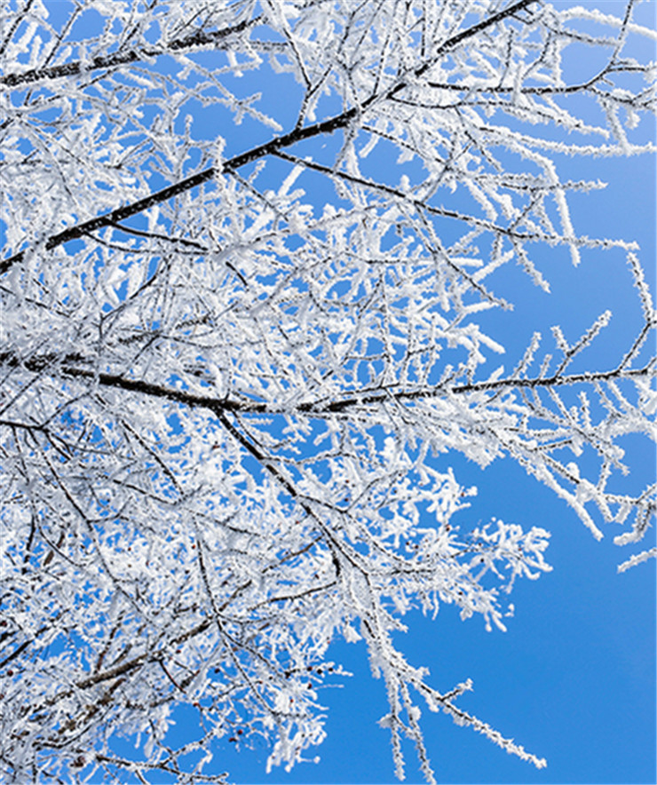 这些冬日枯树一夜开了花