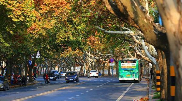 【资讯】来年还能看到十堰最美的车城西路