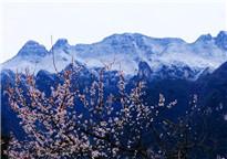 奇景!山上积雪山下花开