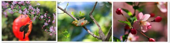 鸟语花香 醉在人民公园的春天