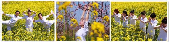 柳陂花间秀瑜伽 乐享好春光