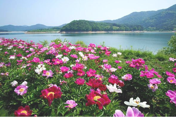 【资讯】郧阳区安阳首届牡丹文化节4月1日盛大开幕