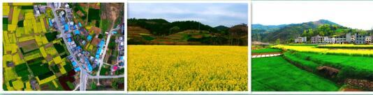 郧西的油菜花,灿烂了整个春天