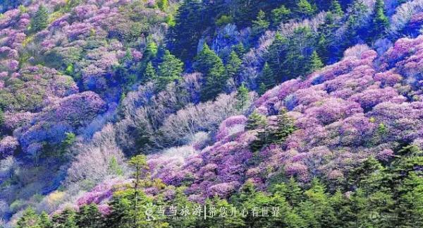 【资讯】神农架踏春赏花秘笈!在这里邂逅绚烂春天