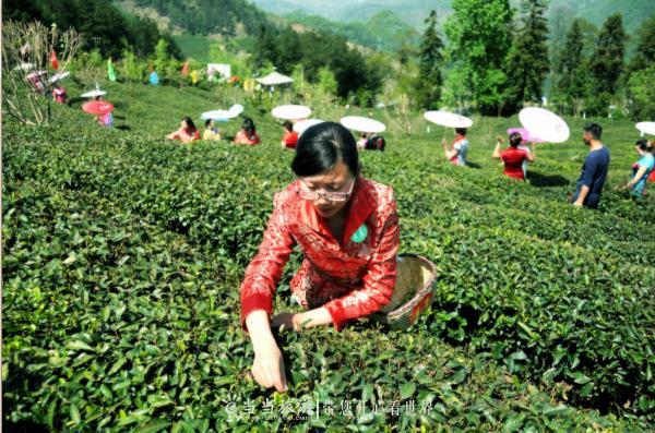 【资讯】观茶戏、赏茶景,竹溪龙王垭采茶节正式开幕