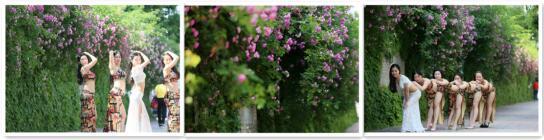 立夏时节 人面蔷薇相映红