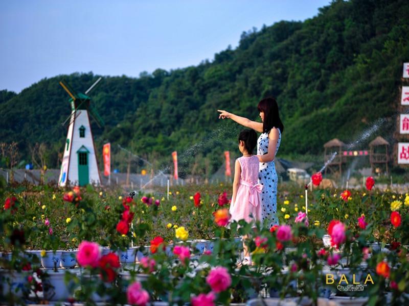 东城开发区天赐玫瑰花园梦幻浪漫 各色玫瑰美醉游人