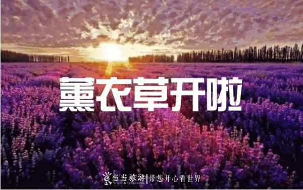 十堰最美薰衣草花海盛开了!