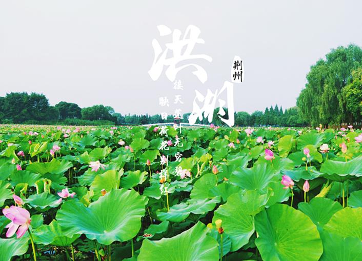 洪湖之美,美在自然
