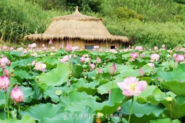 【资讯】太美了!竹溪竟藏着一片这样的花海!