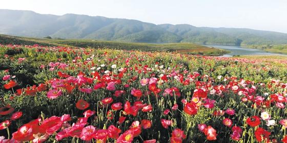 【资讯】汉江绿谷已具雏形  八大园区基本成型