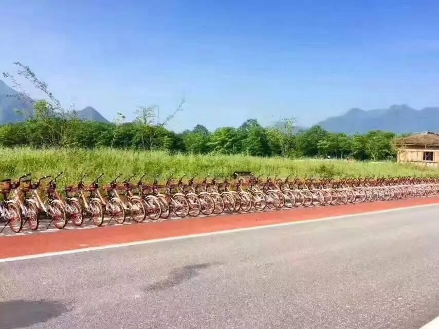 【资讯】太棒啦!摩拜单车入驻大九湖国家湿地公园