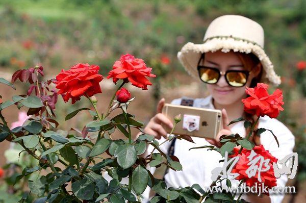 【资讯】盛夏红满堂!习家店500余亩紫薇花开迎客来