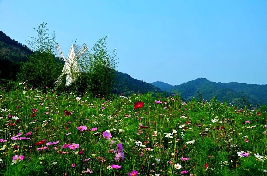 【资讯】依山傍水泛花海,美丽水乡等你来!