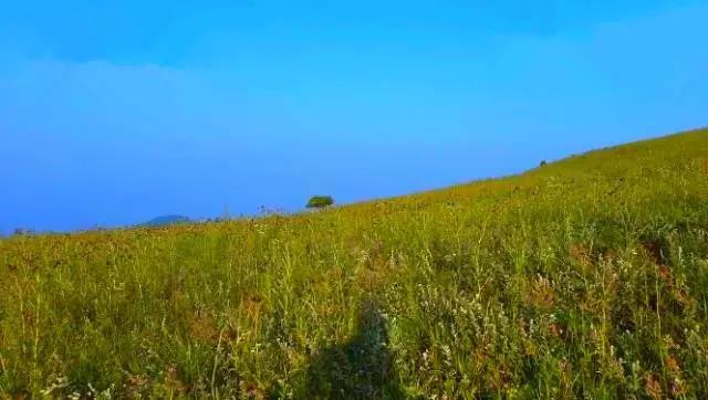 【资讯】盛夏送你家门口的大草原  让你的眼睛吃冰激凌
