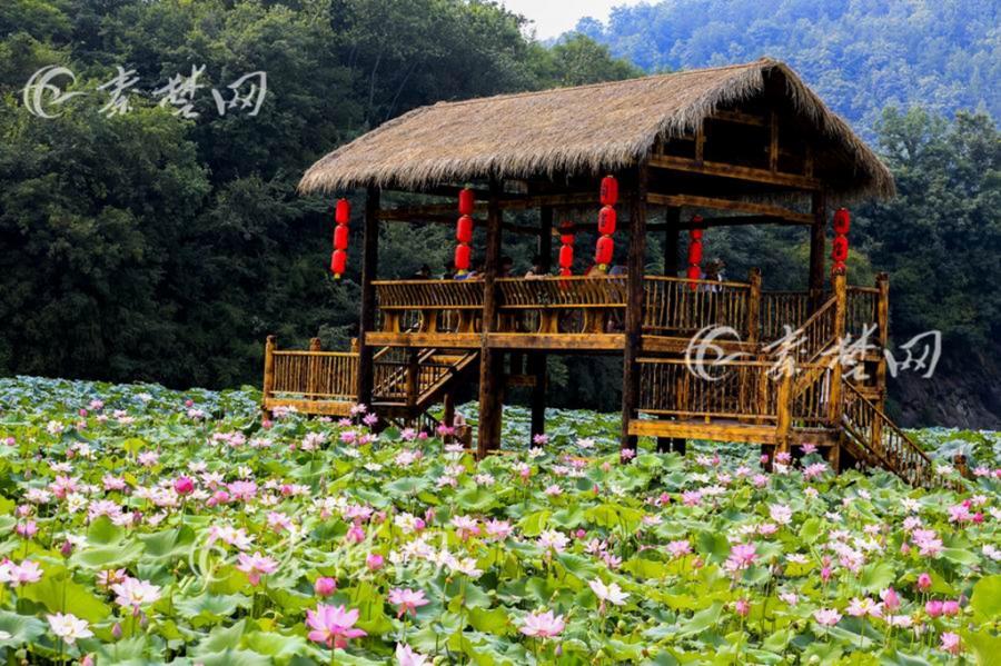【资讯】花开致富路!湖北省唯一淘宝村的荷花盛放!