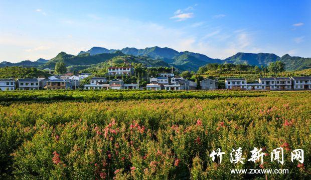 【资讯】荷花开紫薇艳,来这个美丽乡村让你大饱眼福!