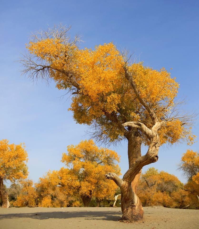 额济纳  邂逅胡杨林 穿越巴丹吉林沙漠摄影观光6日游