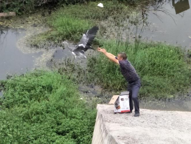 【资讯】放飞苍鹭:人与自然和谐相处的靓丽风景