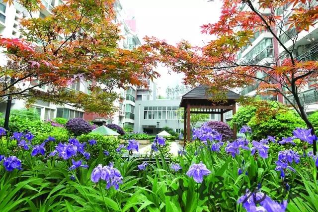 【资讯】创文让城市更美丽,十堰的小区环境焕然一新!