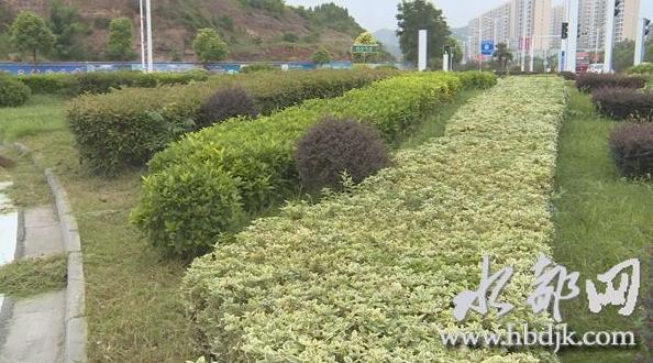 【资讯】扮靓水都:丹江口将修建8个左右的公园游园
