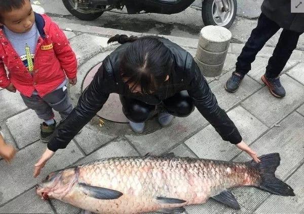 【资讯】最大的60斤!丹江口大坝泄洪,市民争相捕捞大鱼