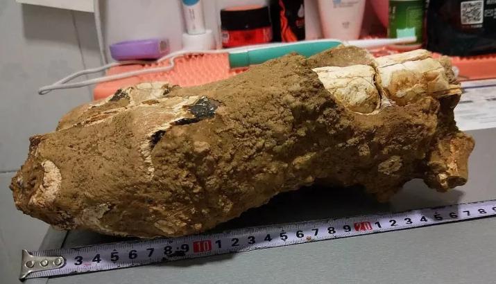 十堰发现动物化石