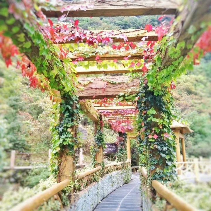 【资讯】秋日胜春朝,诗情飞碧霄:领略五龙河之秋雨