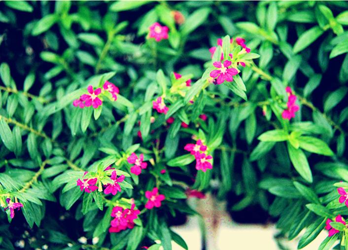 黄龙壹号生态园的鲜花