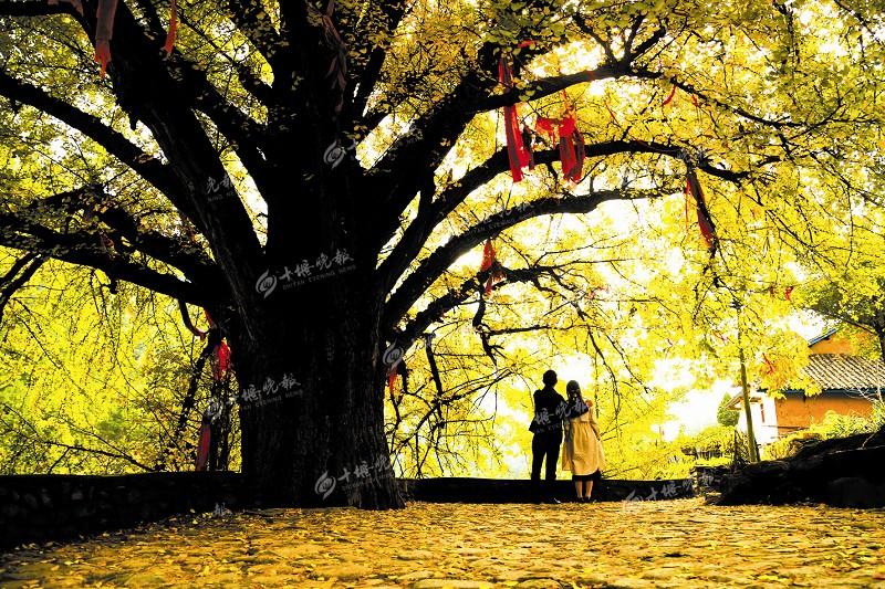 【资讯】果子熟,叶子黄,我被色彩斑斓的浪溪村惊艳了