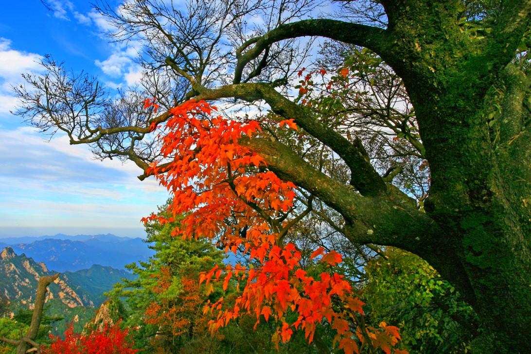 河南尧山赏红叶,福泉温泉.图片